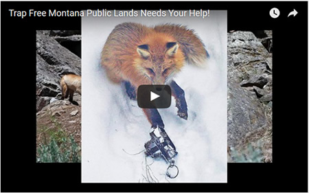 link to video - We need your financial support to help us win for wildlife and the public trust, in the field, in political arenas and now in the courts.