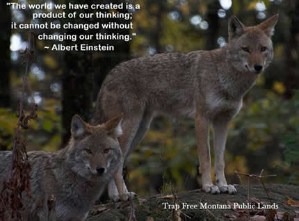 "Image of coyote and quote from Albert Einstein - ""The world as we have created it is a process of our thinking. It cannot be changed without changing our thinking."""